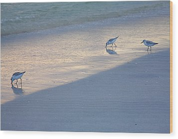 Sanderlings At Dusk I  Wood Print by Steven Ainsworth