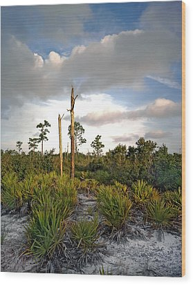 Sandhill And Clouds II. Lake Lizzie Preserve. Wood Print