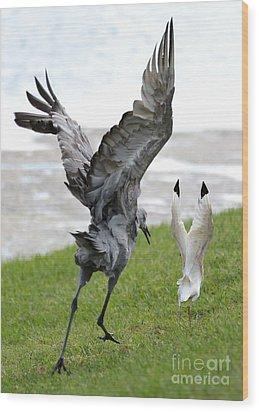 Sandhill Chasing Ibis Wood Print by Carol Groenen