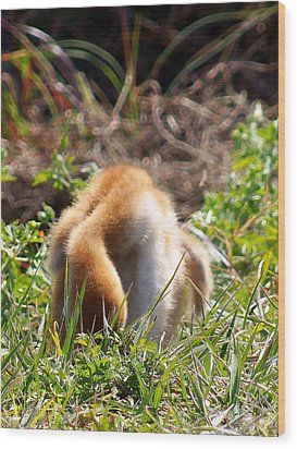 Wood Print featuring the photograph Sandhill Chick 008 by Chris Mercer