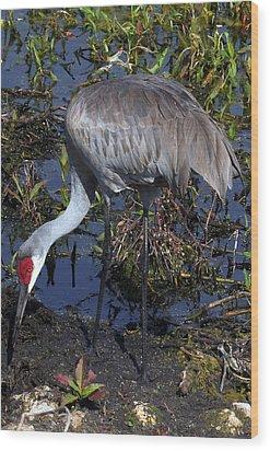 Sandhill Crane 035 Wood Print by Chris Mercer