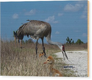 Wood Print featuring the photograph Sandhill Crane 038 by Chris Mercer