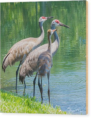 Mom Look What I Caught Wood Print by Susan Molnar