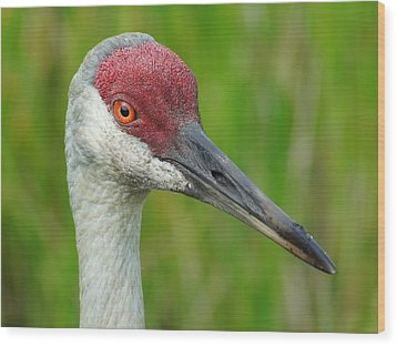 Wood Print featuring the photograph Sandhill Crane Female Close Up by Lynda Dawson-Youngclaus