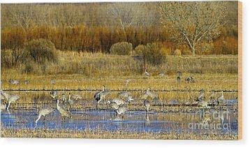 Sandhill Flock In Fall Wood Print by Martha Marks