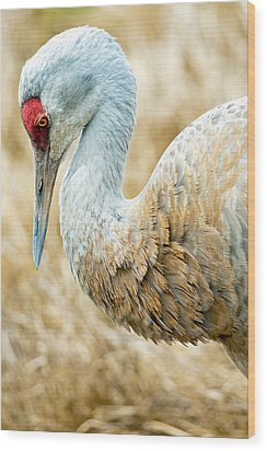 Sandhill Crane Wood Print by Michele Wright