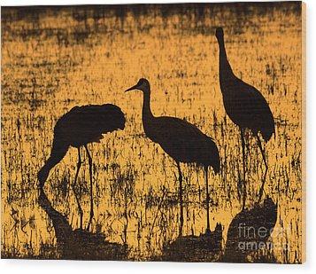 Sandhill Crane Silhouette Wood Print