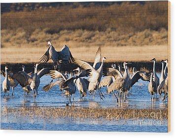 Cranes Dance For Joy Wood Print by Martha Marks