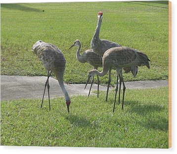 Sandhill Cranes Family Wood Print by Zina Stromberg