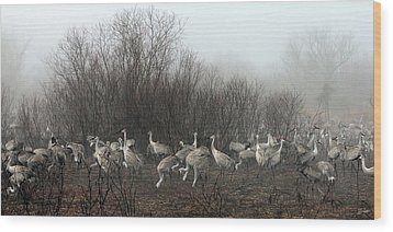 Sandhill Cranes In The Fog Wood Print