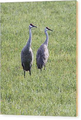 Wood Print featuring the photograph Sandhill Cranes In Wisconsin by Debbie Hart