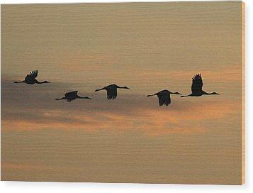 Sandhill Cranes Over Horicon Marsh Wood Print