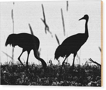 Sandhill Cranes In Silhouette Wood Print