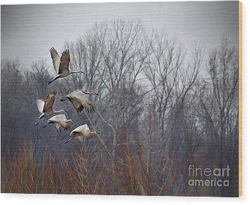 Sandhill Cranes Takeoff Wood Print by Liz Masoner