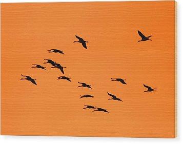 Sandhill Sunrise Wood Print by T C Brown