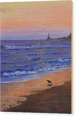 Sandpiper At Sunset Wood Print by C Steele