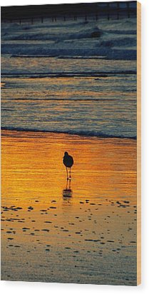 Sandpiper In Golden Dawn Surf Wood Print