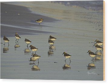 Sandpiper Sunset Reflection Wood Print