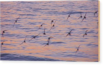 Sandpipers At Sunset Wood Print by John Wartman