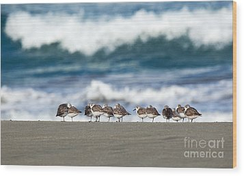 Sandpipers Keeping Warm On A Very Cold Day At The Beach Wood Print