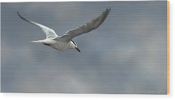 Sandwich Tern Wood Print by Aaron Blaise