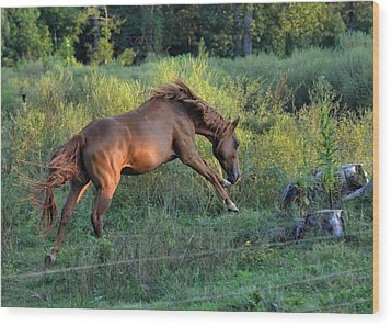 Sandy The Roan Cavorting  - C0094e Wood Print by Paul Lyndon Phillips