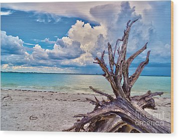 Wood Print featuring the photograph Sanibel Island Driftwood by Timothy Lowry