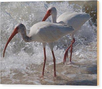 Sanibel White Ibis Wood Print