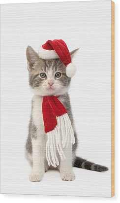 Santa Cat Wood Print by Greg Cuddiford
