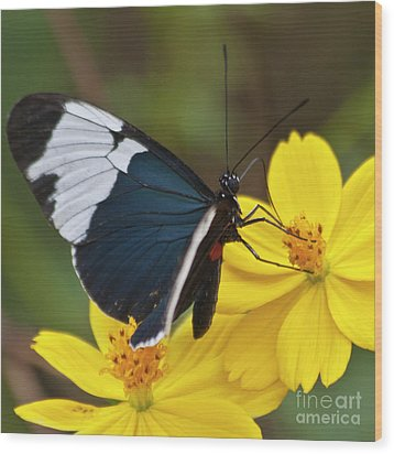 Sapho Longwing Yellow Oriented Wood Print by Heiko Koehrer-Wagner