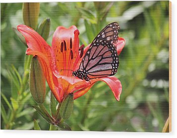 Wood Print featuring the photograph Saskatchewan Prairie Lily And Butterfly by Ryan Crouse