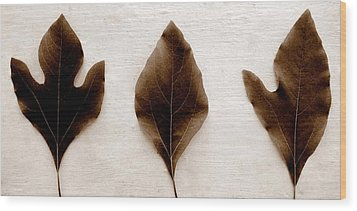 Sassafras Leaves In Sepia Wood Print by Michelle Calkins