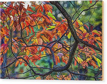 Sassafras Leaves Wood Print