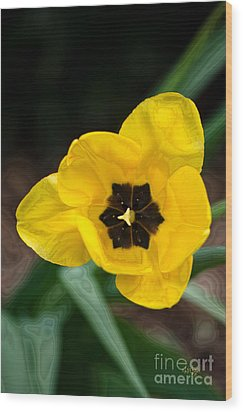 Satin Tulip Wood Print by Lois Bryan