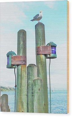 Sausalito Seagull Wood Print by John King