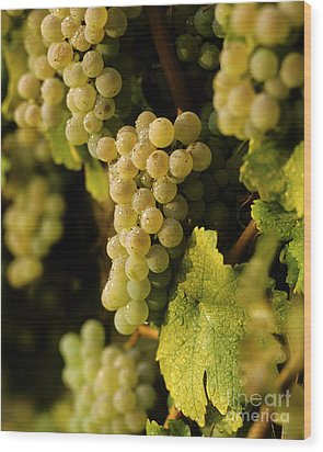 Sauvignon Blanc Cluster Wood Print by Craig Lovell