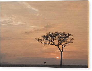 Wood Print featuring the photograph Savannah Dawn by Phyllis Peterson