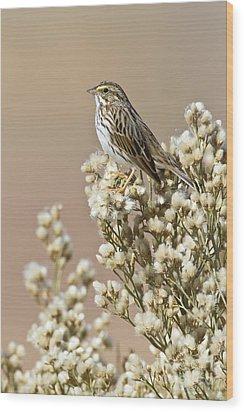 Wood Print featuring the photograph Savannah Sparrow by Bryan Keil