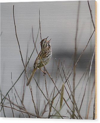 Wood Print featuring the photograph Savannah Sparrow by Marty Saccone
