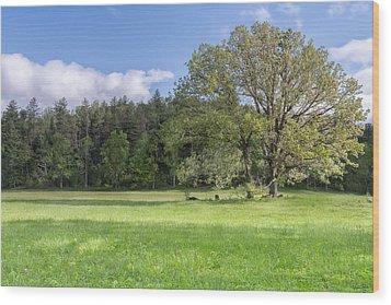 Save My Tree Wood Print by Jon Glaser