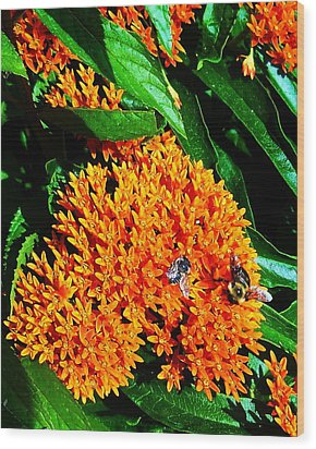 Wood Print featuring the photograph Save Our Bees by Yolanda Raker