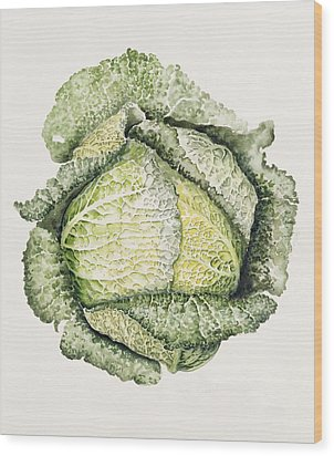 Savoy Cabbage  Wood Print by Alison Cooper