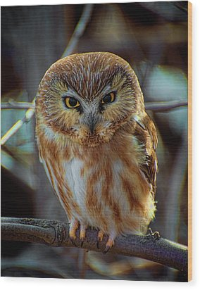 Wood Print featuring the photograph Saw-whet Owl by Britt Runyon