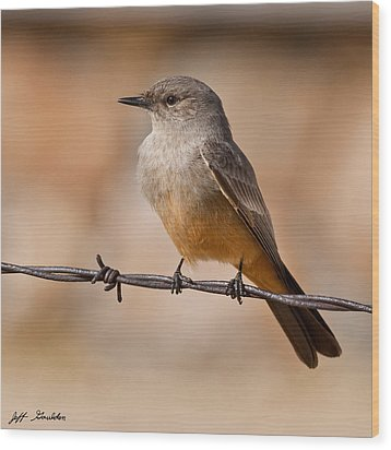 Say's Phoebe On A Barbed Wire Wood Print by Jeff Goulden