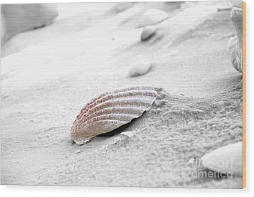 Wood Print featuring the photograph Scallop Shell by Robert Meanor