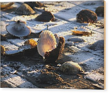Half Shell On Ice Wood Print by Karen Wiles