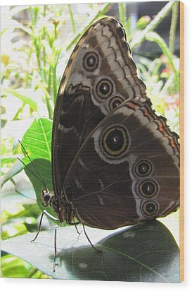 Scarce Morpho Wood Print