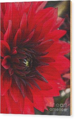 Scarlet Dahlia Wood Print by Janice Rae Pariza
