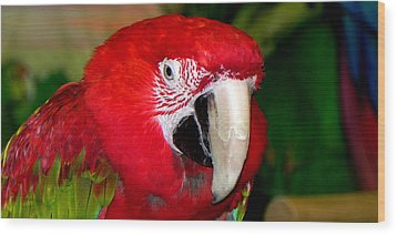 Wood Print featuring the photograph Scarlet Macaw by Bill Swartwout