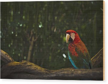 Scarlet Macaw Profile Wood Print by Bradley R Youngberg